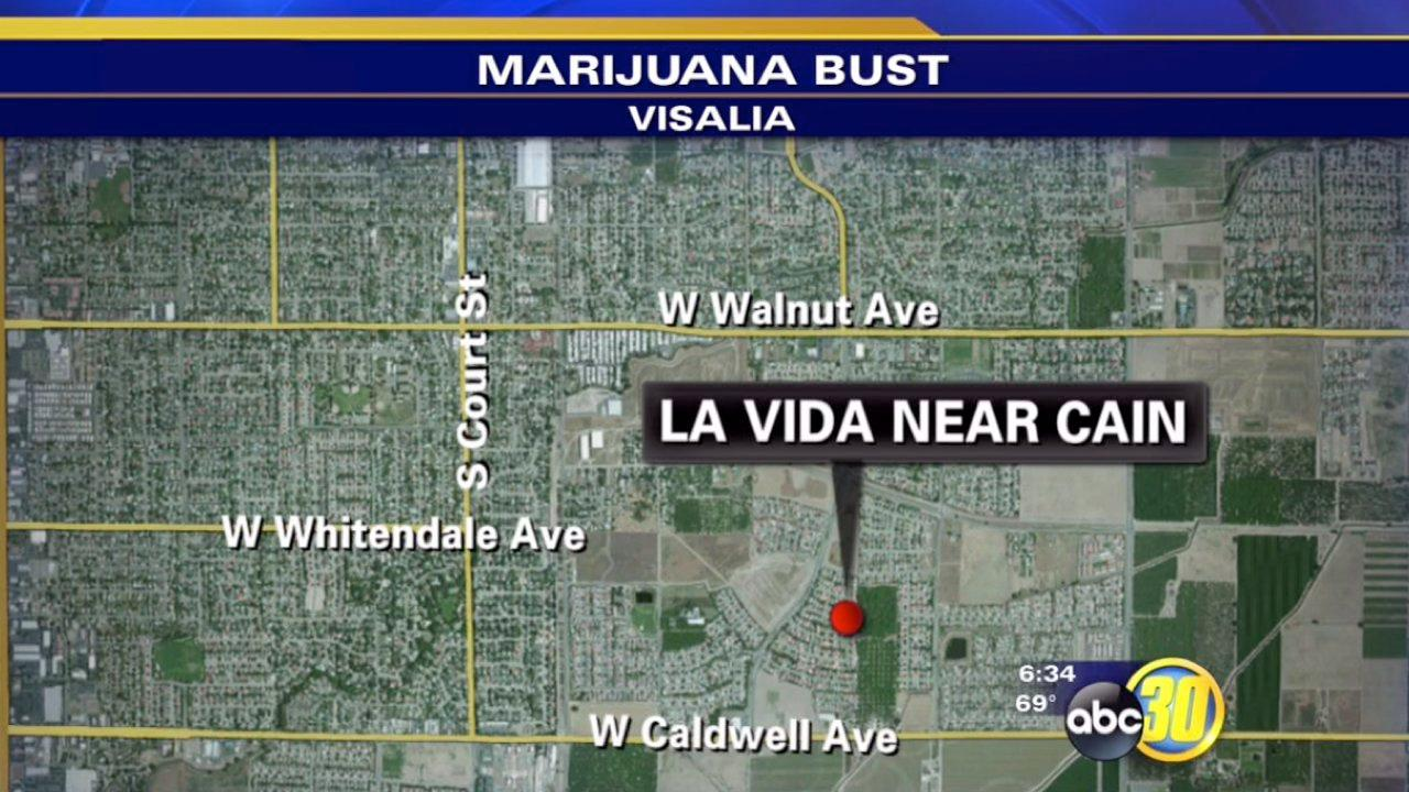 435 marijuana plants found in Visalia bust