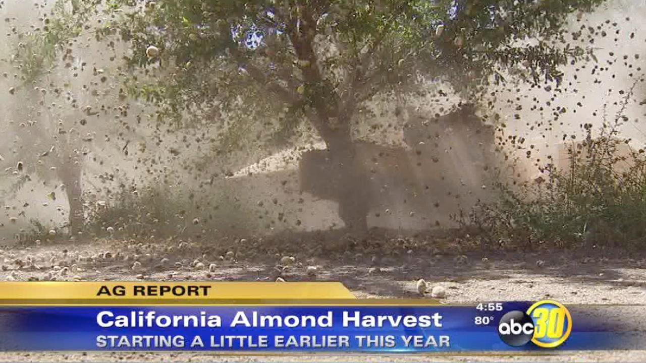 Almond harvest begins early in California