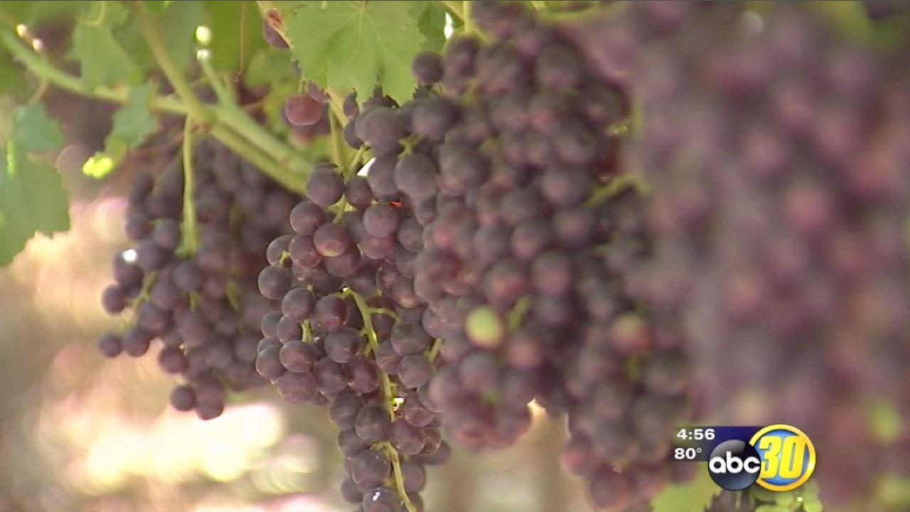 Table grapes find new market in Australia