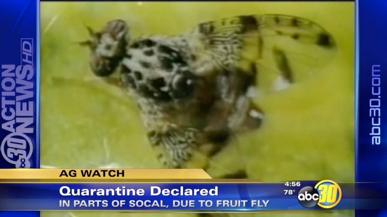 Fruit fly quarantine declared in Southern California