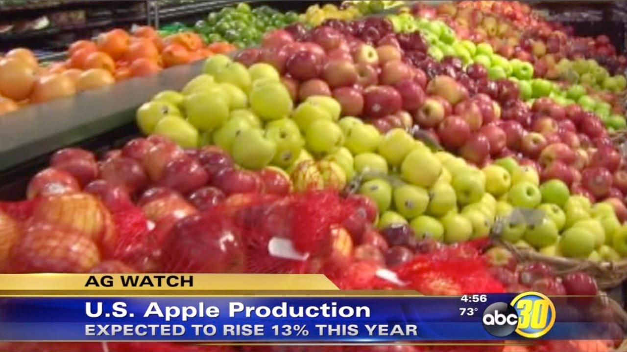 Apple production expected to increase