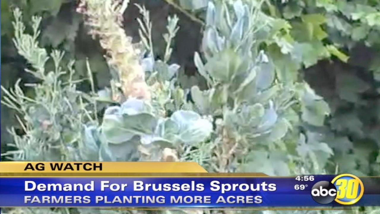 Demand for brussels sprout continues to increase