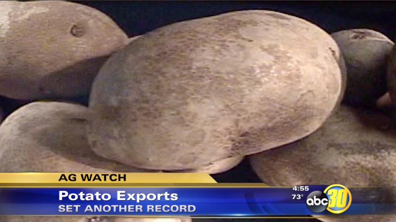 Potato exports see another record year