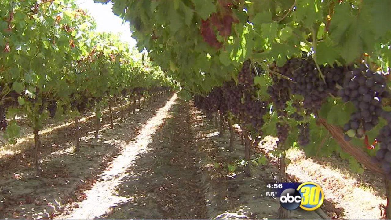 Grape growers look for storm damage