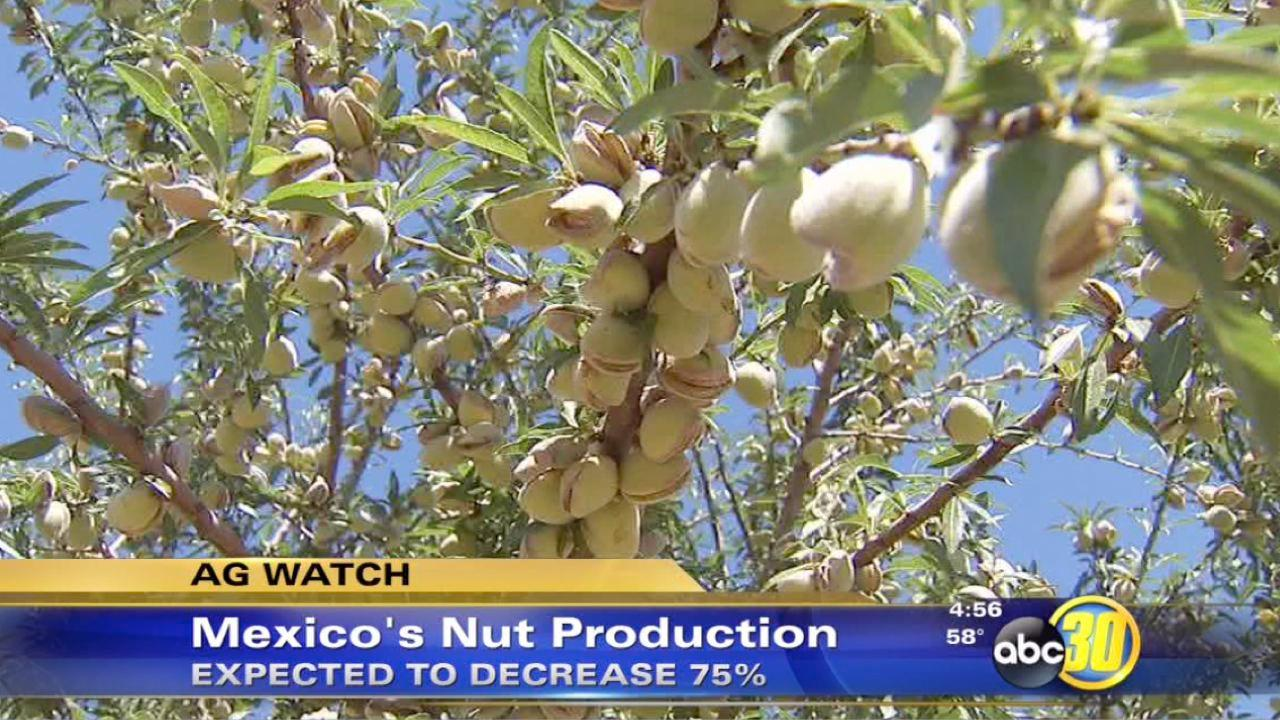 Mexico weather may help California nut farmers
