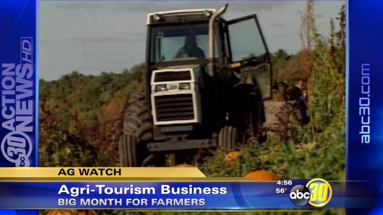 Agri-tourism gears up for their peak season