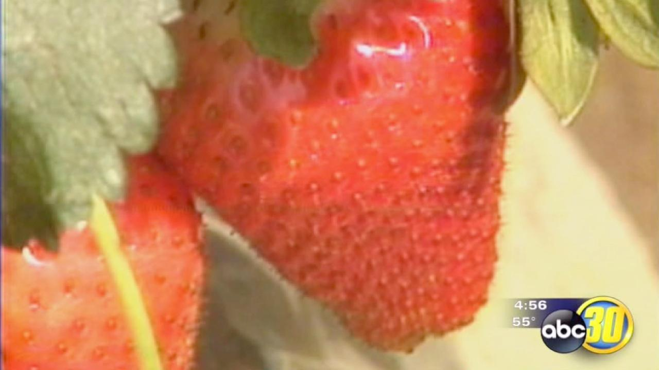 Strawberries continue to be America's favorite fruit