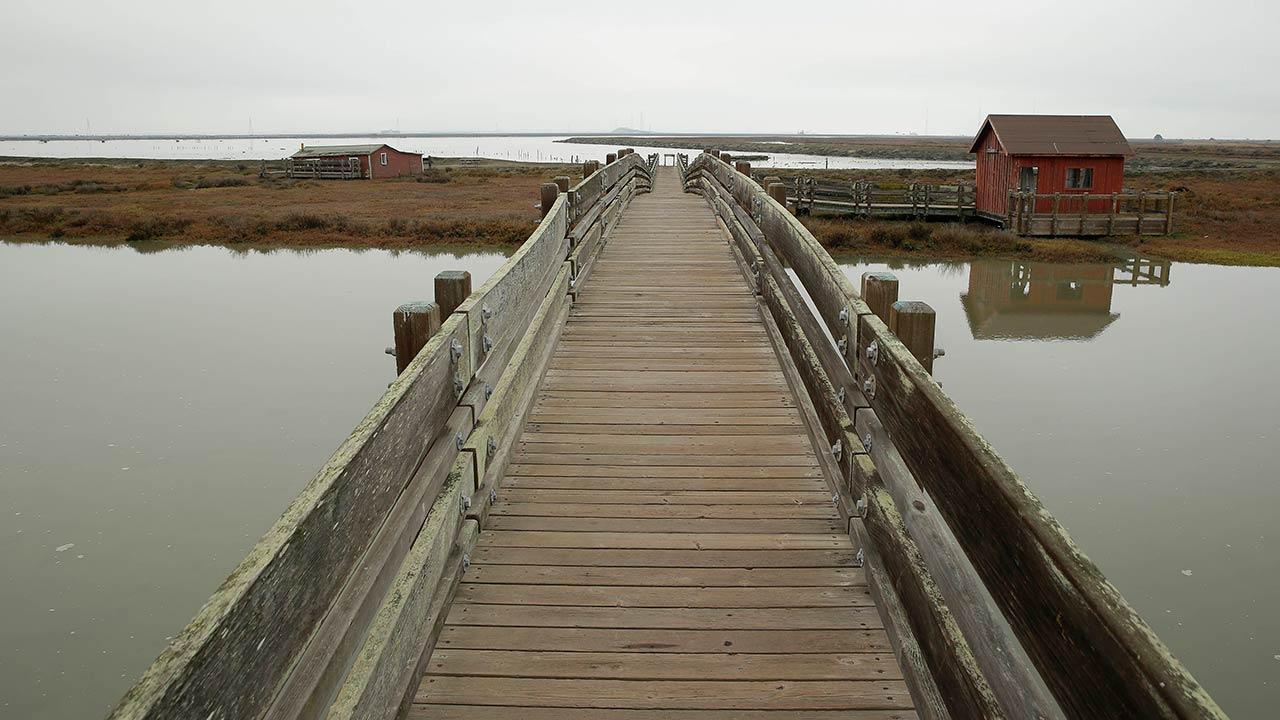 A walkway takes visitors along the Tidelands Trail at the Don Edwards San Francisco Bay National Wildlife Refuge