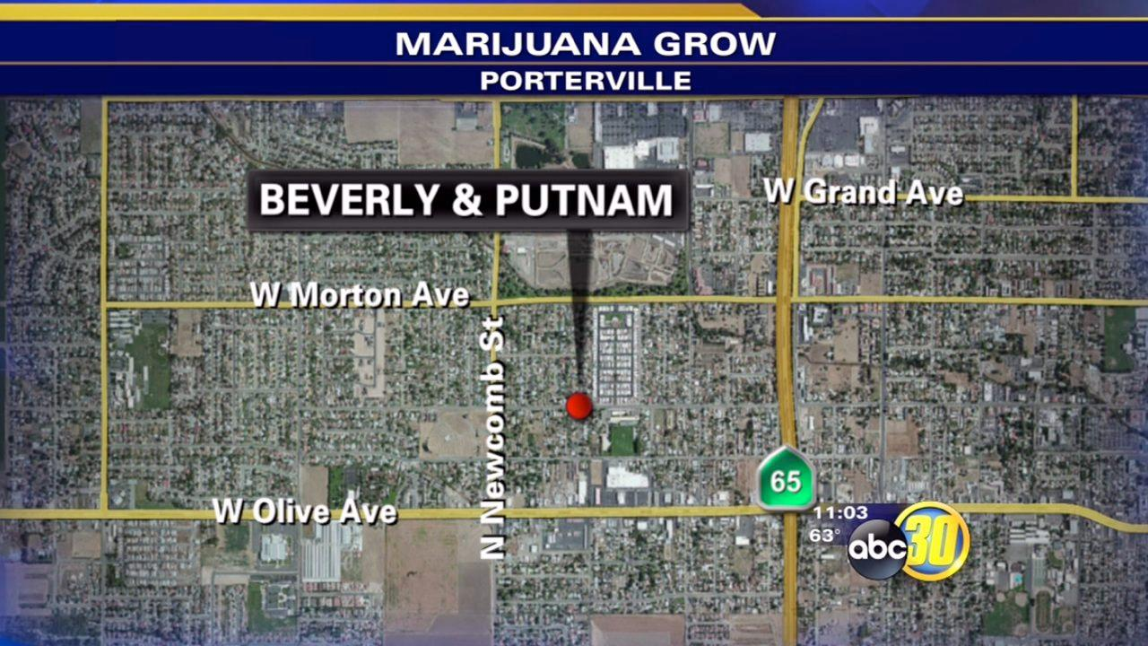 4 arrested after Porterville police find pot grow