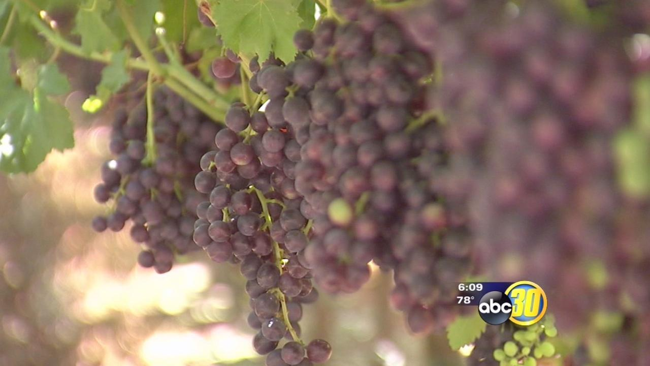 2013 a record year for Calif. grape industry