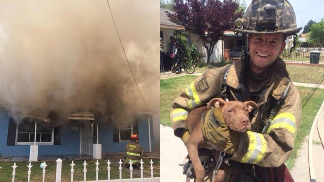 Dog rescued from fire in Central Fresno