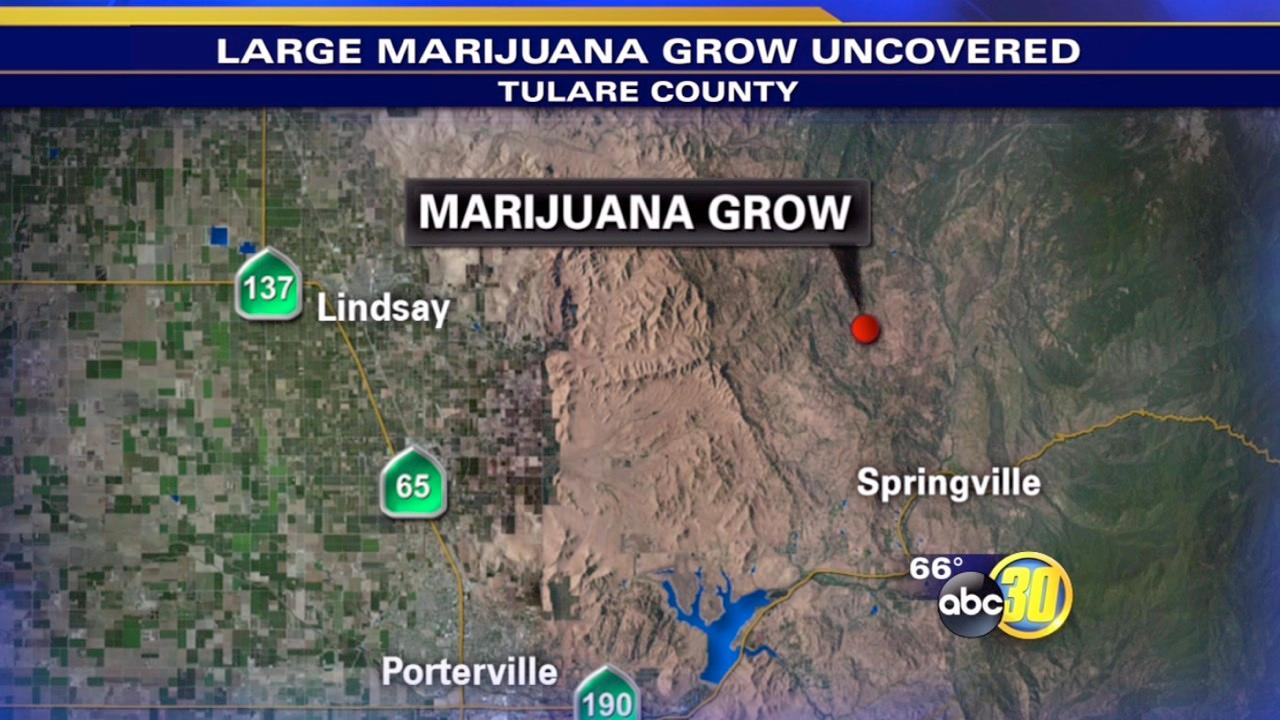 Tulare County authorities raid large marijuana grow