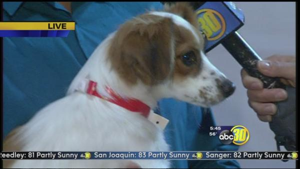 Big Fresno Fair: Pet adoption