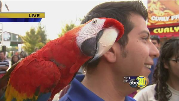 Big Fresno Fair: Brads World Reptiles