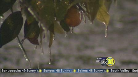 Valley citrus growers battle freezing temperatures