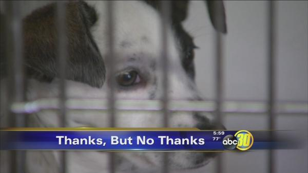 Fresno County to build new animal shelter, rules out any deal with city