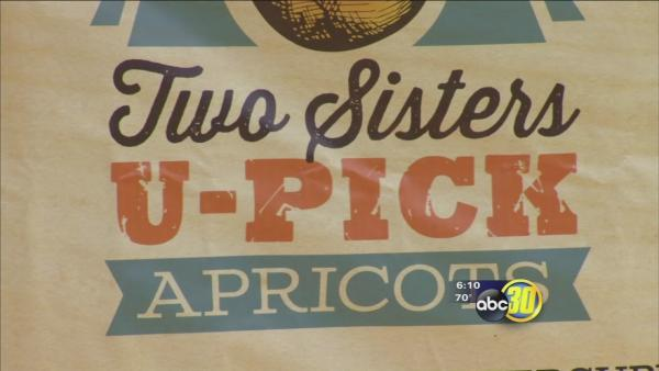 New Adopt-a-Tree Program at Two Sisters U-Pick Apricots