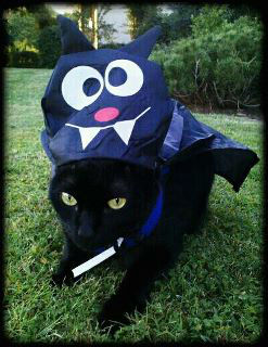 Dr. Phinkles Doo dressed as Bat Cat for Halloween.....  previous 09 Halloween costume winner in Honolulu &#40;went as a Pharo&#41; <span class=meta>(KFSN Photo&#47; uReport.abc30.com)</span>