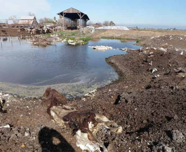 Photo of wastewater ponding adjacent to the burial area. <span class=meta>(KFSN - Central Valley Regional Water Quality Control Board)</span>