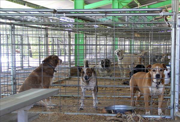 Pets being held at the Mariposa County Fairgrounds during the Carstens Fire evacuations. <span class=meta>(KFSN Photo&#47; uReport &#47; John-Mark Brix)</span>