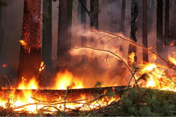 "<div class=""meta image-caption""><div class=""origin-logo origin-image ""><span></span></div><span class=""caption-text"">Downed Fuels, Ladder Fuels (KFSN Photo/ Mike McMillan - USFS)</span></div>"