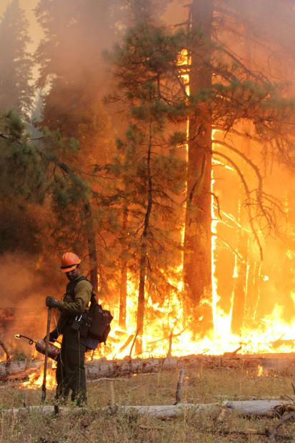 Horseshow Meadow Hotshot and Torching <span class=meta>(KFSN Photo&#47; Mike McMillan - USFS)</span>