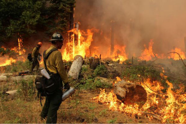 Hotshot &amp; Drip Torch and Fire <span class=meta>(KFSN Photo&#47; Mike McMillan - USFS)</span>