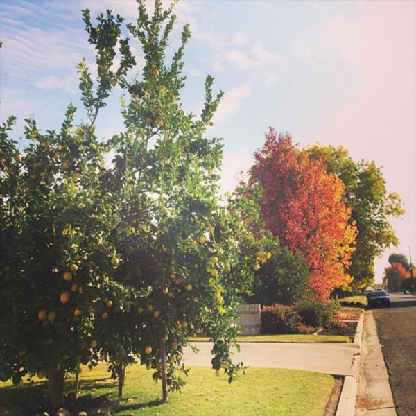 "<div class=""meta image-caption""><div class=""origin-logo origin-image ""><span></span></div><span class=""caption-text"">Autumn in central California. (KFSN Photo/ Instagram / pinchmysalt)</span></div>"