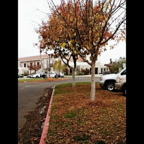 SHS. #fall #fallinfresno  <span class=meta>(KFSN Photo&#47; Instagram &#47; omgitsspmc)</span>