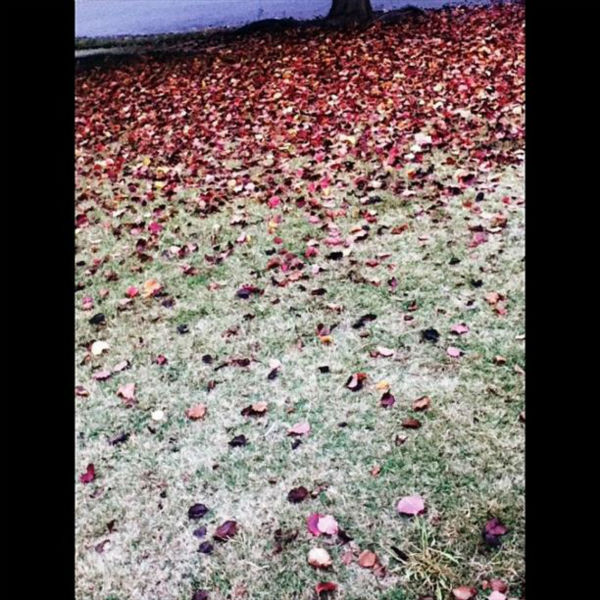 My front yard. #fall #fallinfresno <span class=meta>(KFSN Photo&#47; Instagram &#47; omgitsspmc)</span>