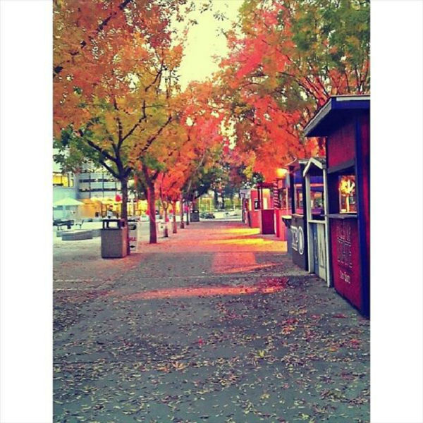 "<div class=""meta ""><span class=""caption-text "">Fall Season. #FresnoState (KFSN Photo/ Instagram / _moralesj)</span></div>"