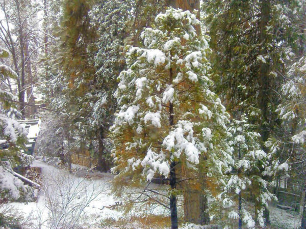 Snow! ? at Big Creek, California. <span class=meta>(KFSN Photo&#47; Aimee Brockway)</span>