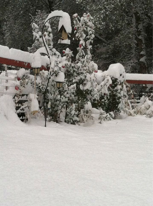 Snow in Bootjack, Ca <span class=meta>(KFSN Photo&#47; uReport &#47; Leonor Perez)</span>