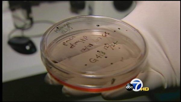 Scientists clone embryo from skin cells