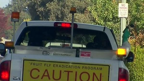 Crews trying to eliminate fruit flies in Cupertino