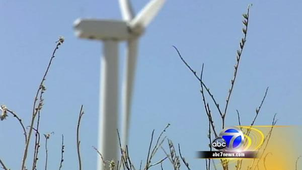 Wind farm poses danger to bird populations