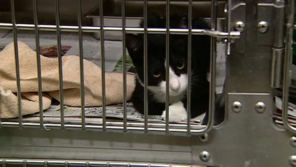 SF adoption agencies struggle to care for cats