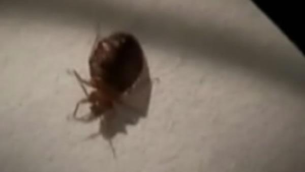 Couple still billed after fleeing bedbugs at motel