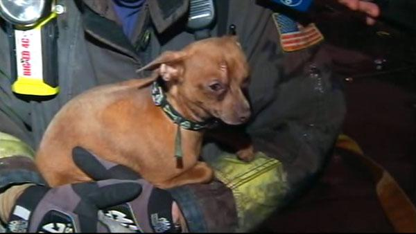 Chihuahua found alive in SF fire ruins