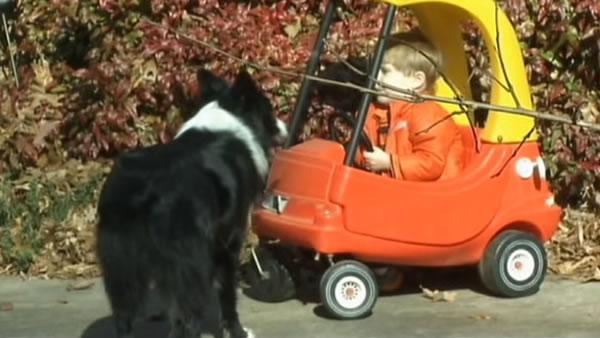 Loyal family dog stays by lost 2-year-old's side