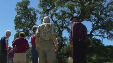 Jack Londons tree