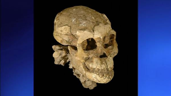 Discovery may prove early humans ate meat