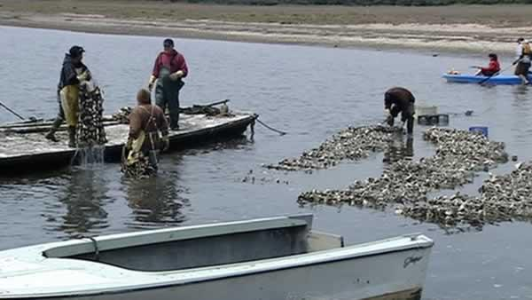Battle over local oyster farms heats up