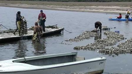 An independent analysis by the Marine Mammal Commission was released on the Drakes Bay Oyster Company.