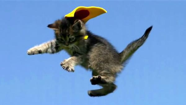 What's Trending: Flying kittens with capes