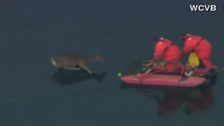 Firefighters rescue deer on frozen lake