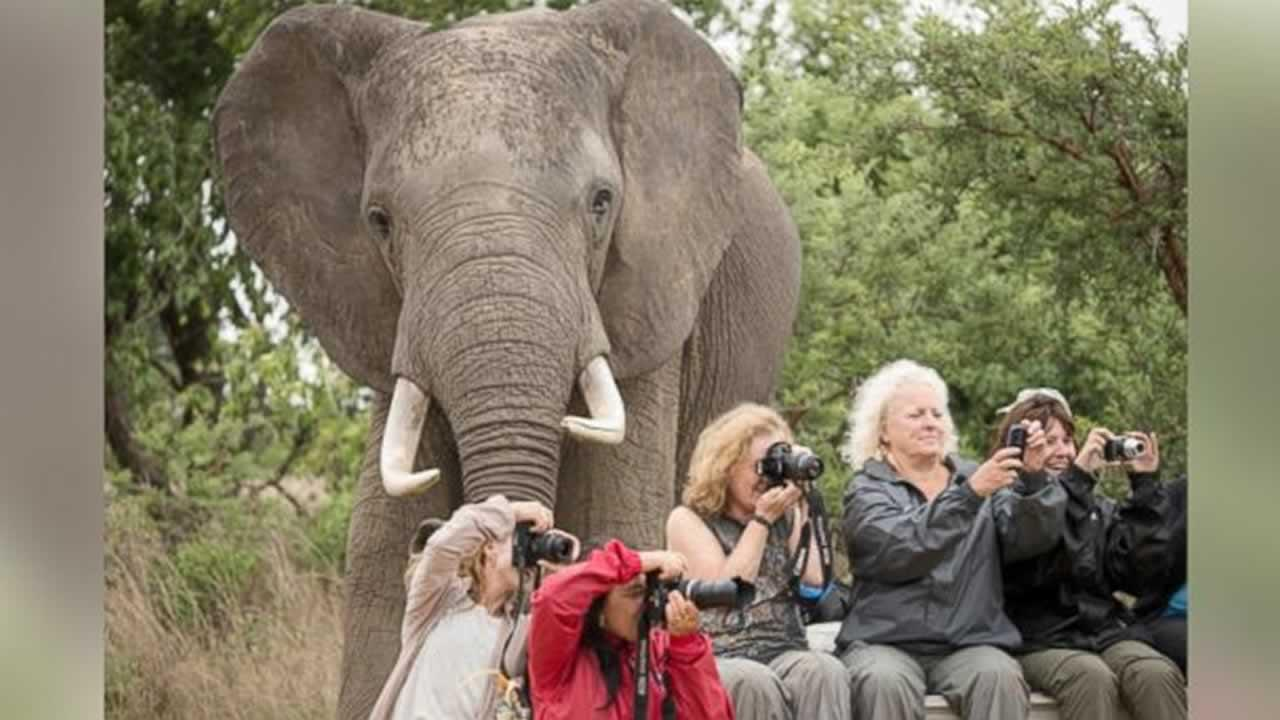 A group of tourists taking pictures of animals at a wildlife center had no idea the real Kodak moment was directly right behind them.