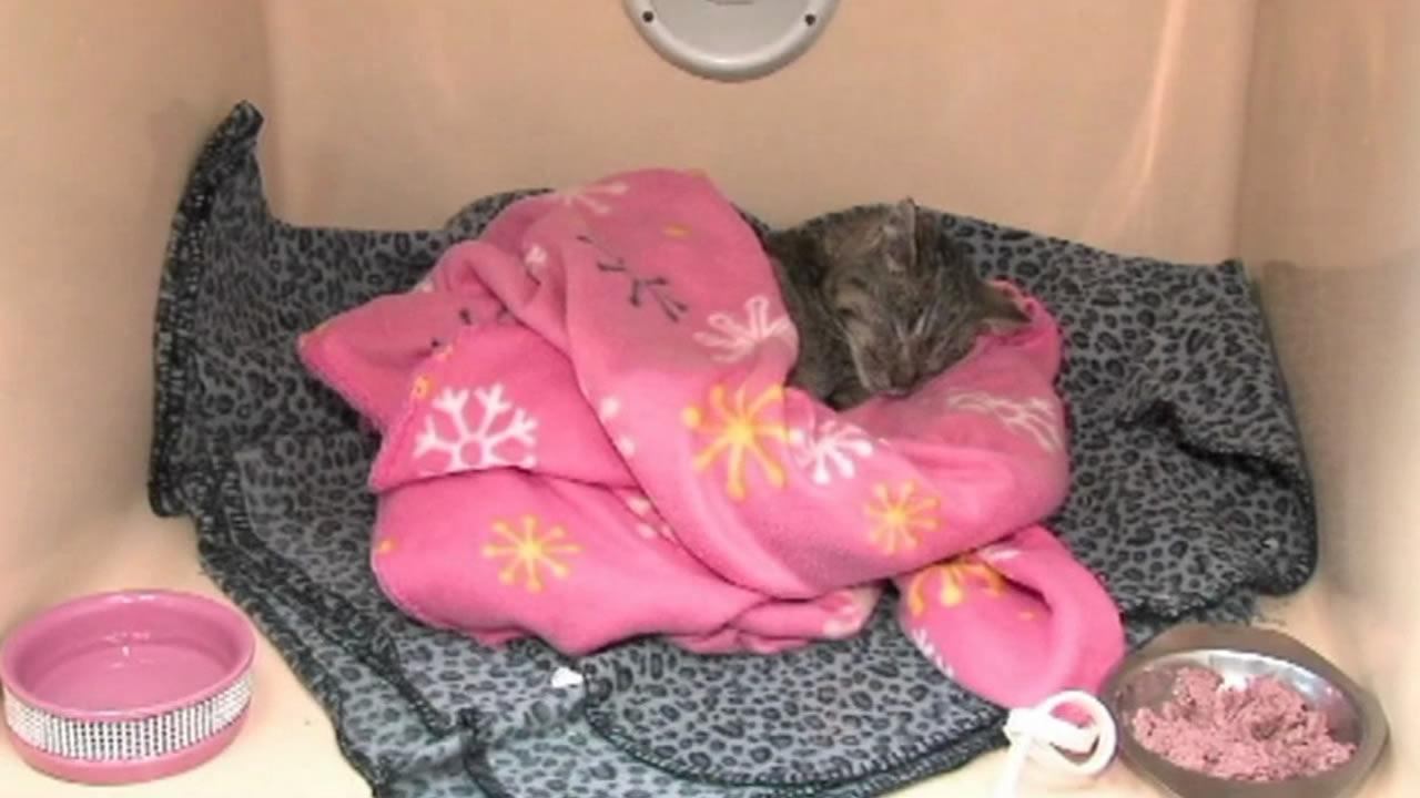 A woman resued a 4-month-old kitten who was literally frozen and stuck on a road in Ohio.
