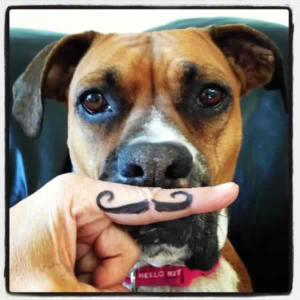 Laylah desperately wanted to participate, so she did.  (With a little help from a friend...) Post your Movember photos to Instagram or Twitter using #ABC7Movember! (Photo submitted by Maria L. via uReport)