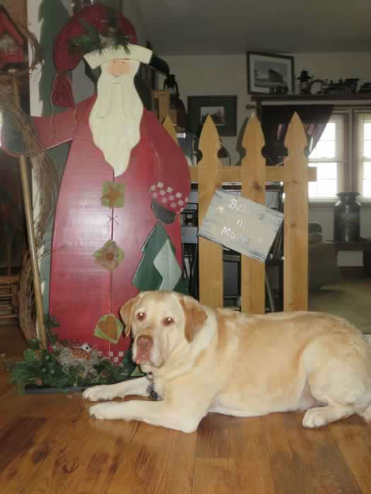 Yellow Lab Jonas with Santa! Post your holiday photos using #abc7holiday! (Photo submitted by Jody H. via Facebook)